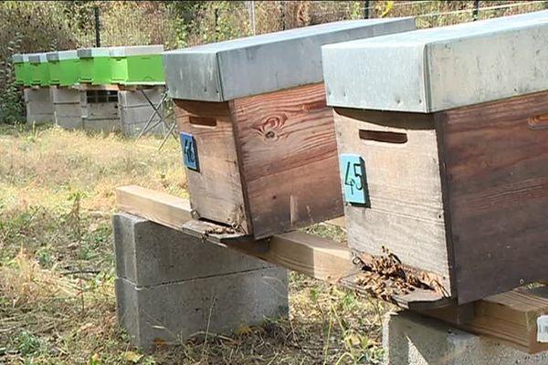 Pour assurer la récolte du pollen et la production de miel, les apiculteurs professionnels n'ont d'autre choix que de déplacer leurs ruches pour suivre la floraison des plantes.
