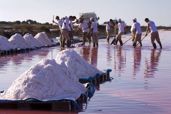 Aigues-Mortes (Gard) - 500 tonnes de fleur de sel ont été récoltées cette année - archives.