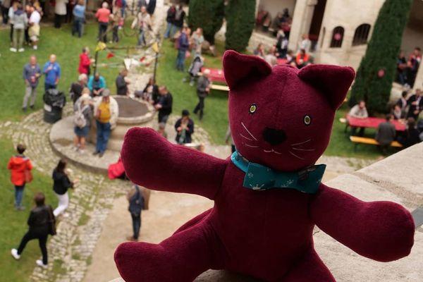 Le chat Perché lors de son week-end à Dole !