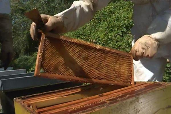 Le cadre de la ruche est pratiquement vide.
