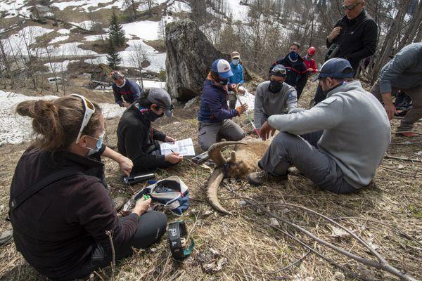 L'intervention au printemps permet d'approcher plus facilement les animaux.