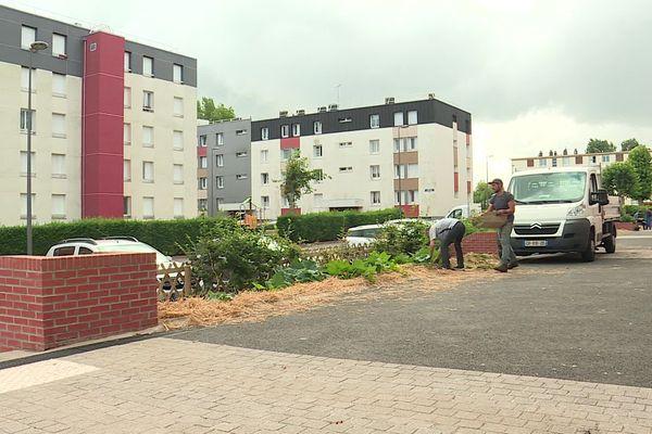 Au pied des immeubles, un jardin partagé de 70 mètres carrés à Dieppe (Seine-Maritime)