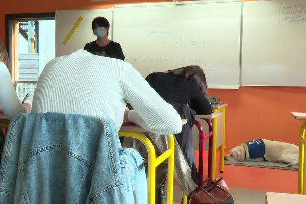 Le labrador est parfois présent dans les salles de cours.