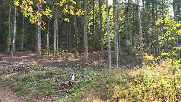 Remiremont : la forêt est devenue dangereuse pour les forestiers tant le risque d'incendie est accru chaque été