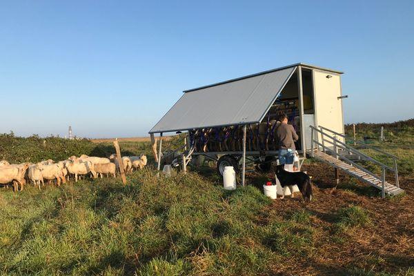 La traite des brebis se fait en plein champ grâce à une salle de traite mobile