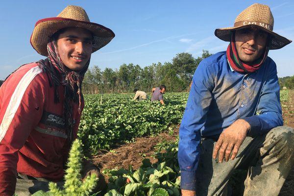 Ihsan (20 ans) et Armani (27 ans) ont commencé à travailler chez Marionnet début juin