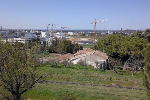 La ferme urbaine de la Condamine cultive des fruits et légumes en bio sur plusieurs hectares dans le quartier du Millénaire, à Montpellier