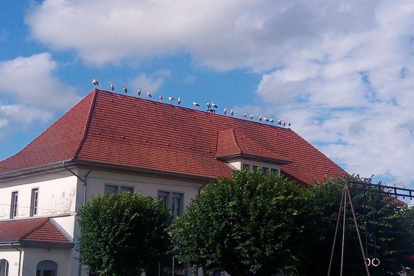 Les cigognes se sont retrouvées en début de soirée sur le toit du groupe scolaire du village.