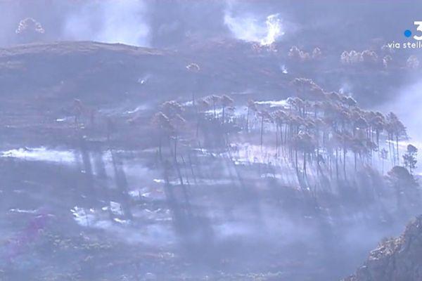 Le feu de Calenzana, en février dernier. 1300 hectares étaient partis en fumée.