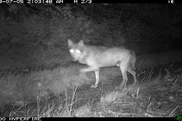 Une image de la vidéo receuillie par l'office national de chasse et de la faune sauvage de l'Hérault