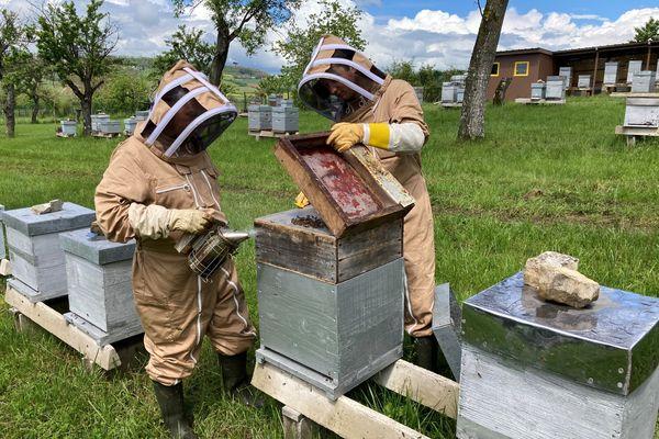 Hervé et Rémy Coche, apiculteurs professionnels à Laneuvelotte inspectent leurs ruches