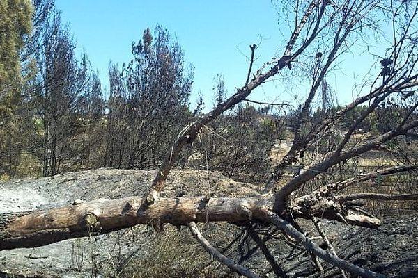 Peyriac-de-Mer (Aude) - 500 hectares de garrigue ravagés par les flammes - 31 juillet 2014.
