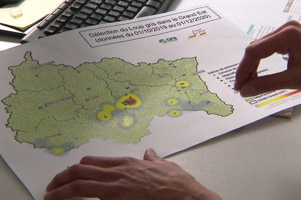 Carte présentant les zones de détection du loup dans le Grand Est.