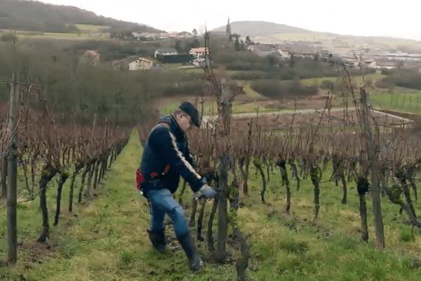 Claude Sontag dans ses vignes à Contz-les-Bains (Moselle).