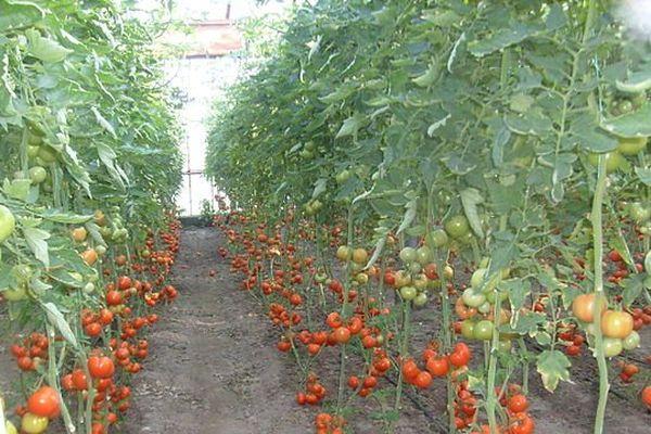 La tomate marocaine au coeur du conflit.