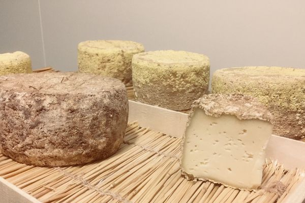 """""""La fote des bergères"""", un fromage de brebis """"Origine Corrèze"""""""