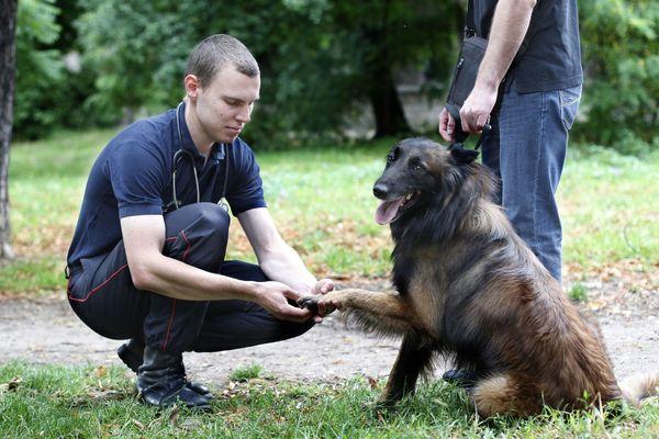 ILLUSTRATION / Les chiens vont être éduqués à reconnaître les effluves particulières qui se dégagent d'un malade du covid-19. Reste à s'assurer qu'il en existe.