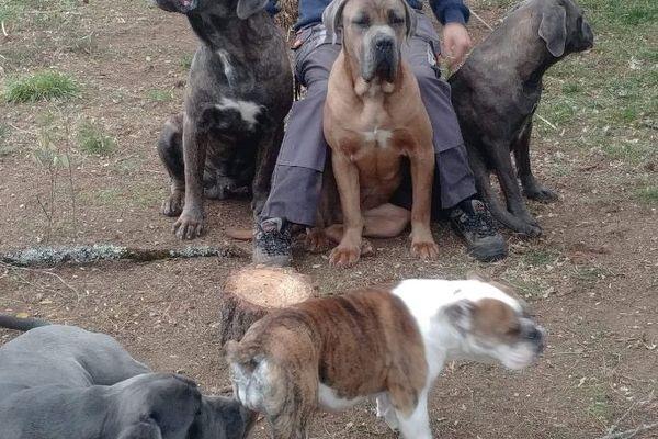 Alexandre Chauvet, le bénévole responsable du refuge avec les cané-cortos et le bulldog qui doivent être euthanasiés.