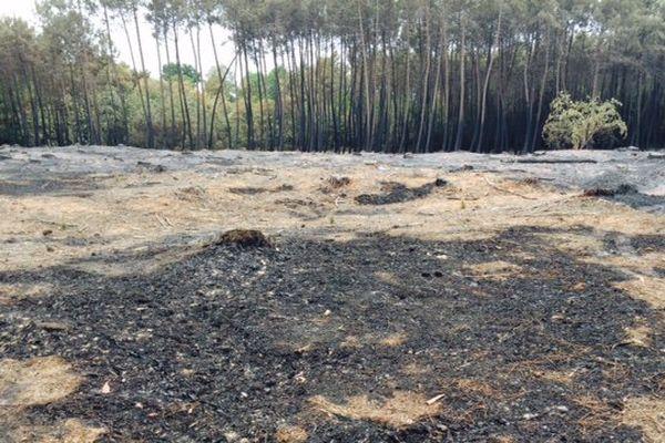"""En quelques heures l'incendie a été circonscris mais le paysage reste """"lunaire"""""""