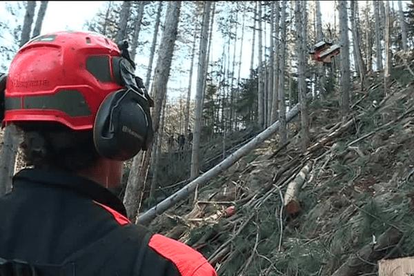 Utilisation du câble-mât dans la forêt de Barnas