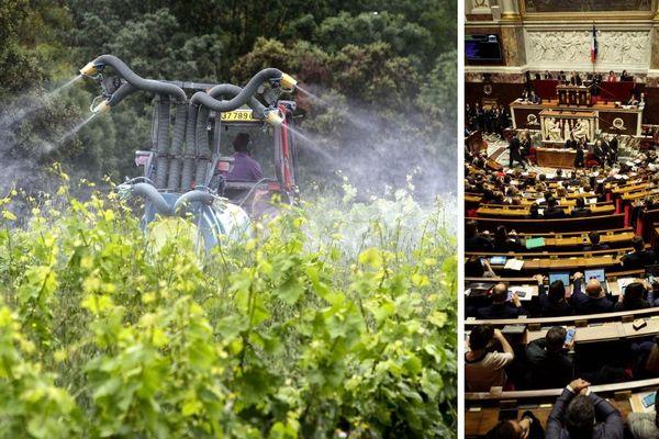 Les députés picards ont-ils voté pour ou contre l'interdiction du glyphosate en France d'ici 2021 ?