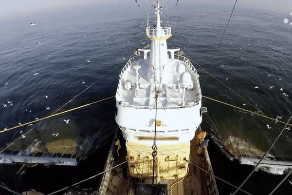La pêche électrique, un fléau pour la biodiversité marine
