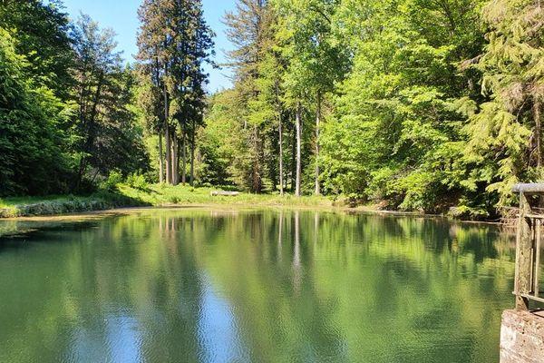 Le cadre bucolique du larcin : le plan d'eau de l'arboretum de La Jonchère-Saint-Maurice. Le nénuphar était en haut du plan d'eau