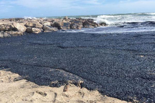 Des milliards de velleles se sont échouées sur la plage de Palavas-les-Flots et Villeneuve-lès-Maguelone - 10 avril 2018
