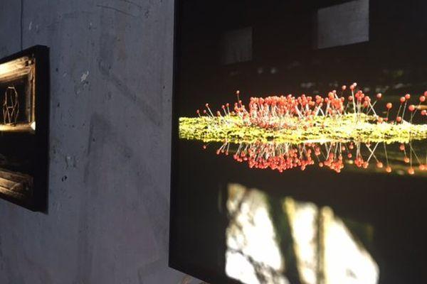 Les photographies rétro-éclairées de Sébastien Gaudronneau.