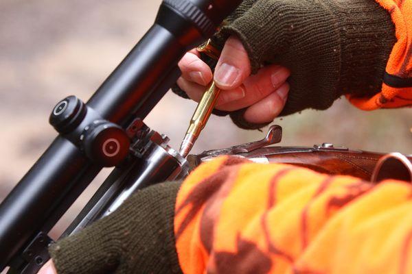 La préfecture de Haute-Savoie renonce à autoriser la chasse en été. Photo d'illustration.