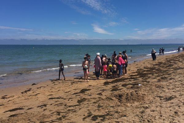 Les enfants observent les méduses ramenées dans des seaux