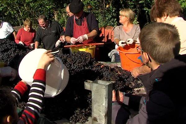 Une trentaine d'habitants ont participé ce dimanche aux vendanges des vignes de Vingt-Hanaps, près d'Ecouves