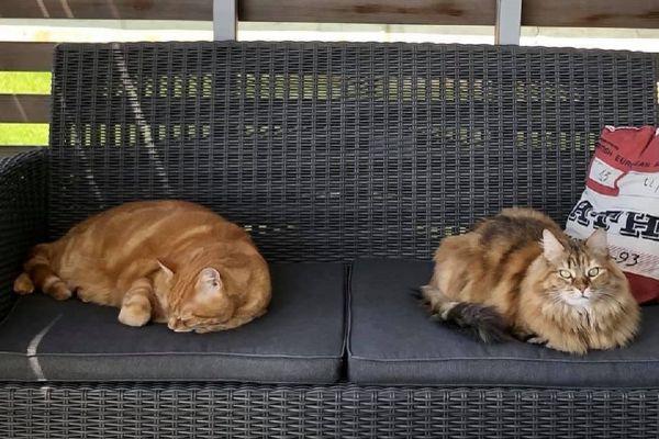 Twix et Cahuette ont été abandonnés dans un carton en 2012. Une famille aimante de Strasbourg leur a offert un foyer, et partage leur vie depuis maintenant neuf ans.