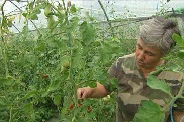 La sécheresse contraint les agriculteurs à se séparer de leurs récoltes