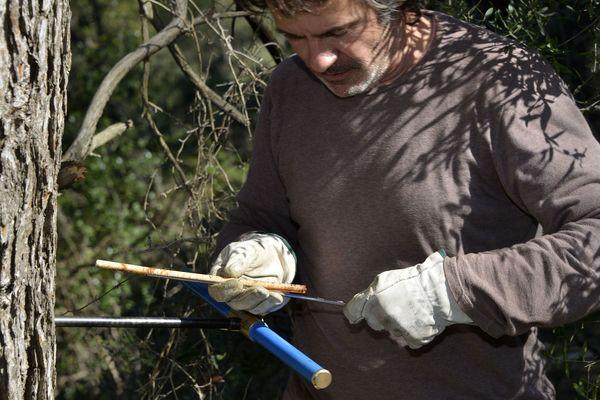 Le carottage des arbres permet d'extraire une partie de ses cernes qui vont livrer leur contenu et notamment les métaux lourds sur une période donnée.