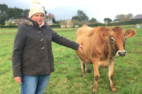 Anne-Laure a fait venir sept jersiaises sur l'île de Bréhat et aimerait vendre des produits laitiers sur place