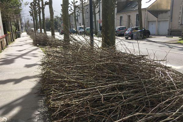 Il y a environ 300 000 arbres répartis sur la ville de Nantes