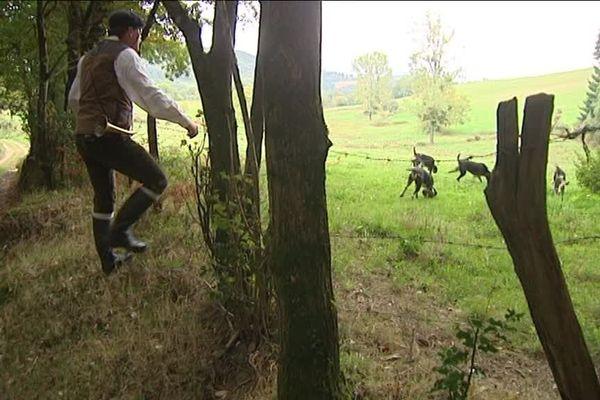 Débusquer un lièvre, sans autre but qu'admirer le travail des chiens : les adeptes de la chasse sans fusil, ou chasse au bâton, sont de plus en plus nombreux.