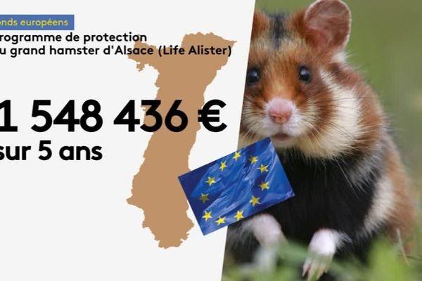 subventions européennes pour le grand hamster d'Alsace