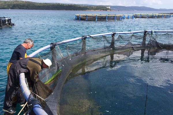 La ferme aquacole de Santa Manza (Corse du Sud)