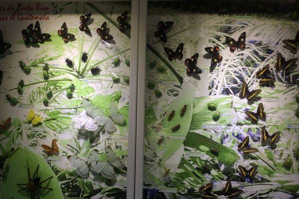 Panorama d'insectes naturalisés pour l'exposition Canopée à Dieppe