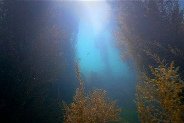 On récolte 75 000 tonnes d'algues vertes sur notre littoral