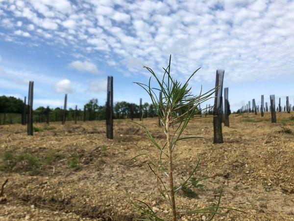 8 essences d'arbres ont été plantées à Castin, dans le Gers.