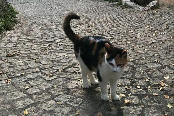 Les associations de protection animale demandent au gouvernement de pouvoir continuer leur activité de nourrissage des chats errants et de stérilisation.