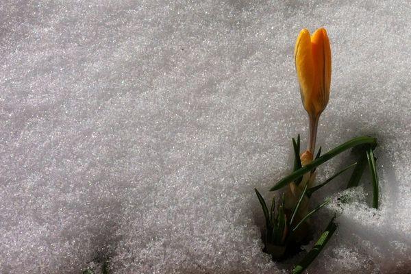 Le printemps arrive dans les jardins marnais