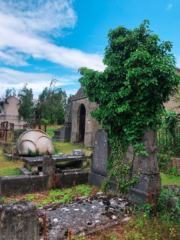 Dans les allées du cimetière, l'herbe remplace peu à peu le gravier autour des tombes.