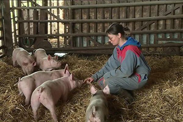 Ces cochons de deux mois sont nés à la ferme et ont été sevrés