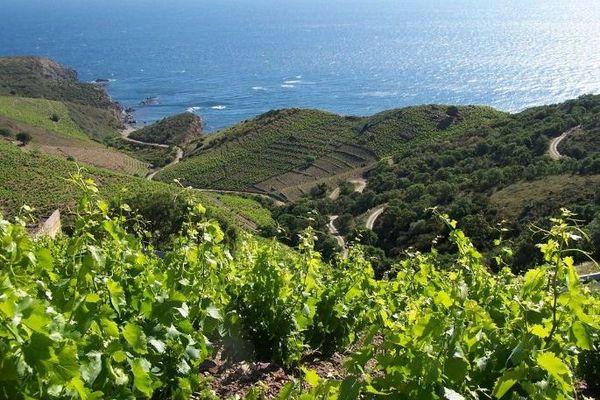 Les vignes de Collioure - archives.