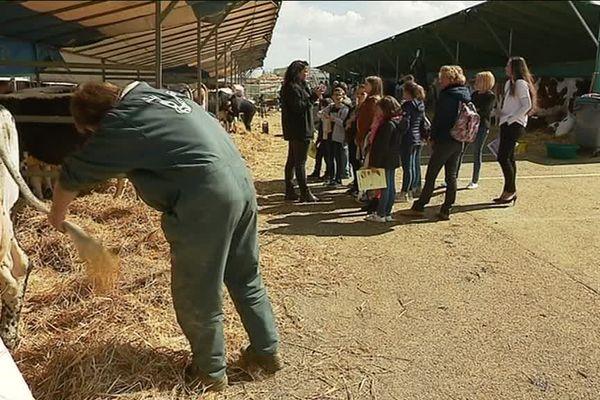 Des jeunes, comme cette classe de CM1, ont découvert le monde des vaches lors du festival de l'élevage de Vesoul
