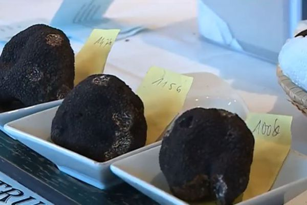 Le marché de la truffe a accusé un recul de 20% cet hiver, après une saison record l'an dernier